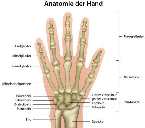 Gelenke Der Hand Ksw
